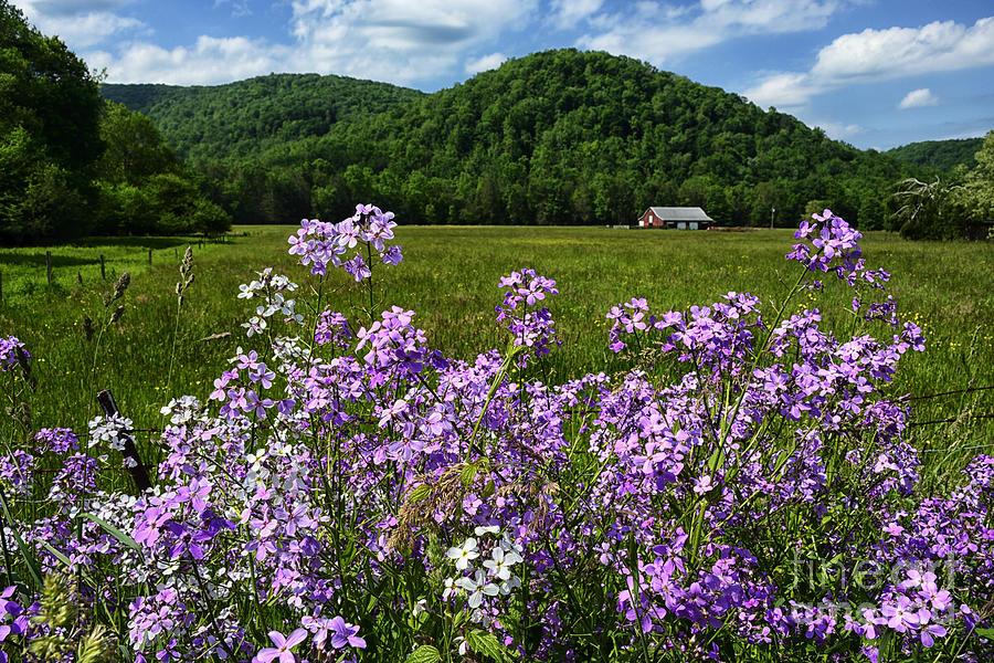 Phlox Photograph - West Virginia Serenity  by Thomas R Fletcher