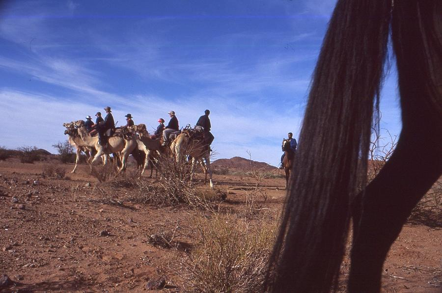 Horses Photograph - Western Cape Desert South Africa 1996 by Rolf Ashby