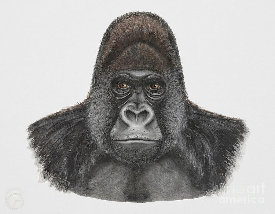 Western Gorilla - Gorilla Gorilla - Gorille De Louest - Gorila Occidental - Ocidente - Occidentale Painting