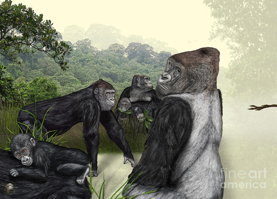 Western Lowland Gorilla - Gorilla Gorilla Gorilla Painting