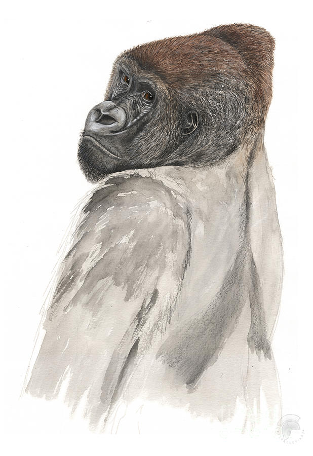 Western Lowland Gorilla - Gorilla Gorilla - Great Ape - Primate - Gorille - Gorila - Goriluapa Painting