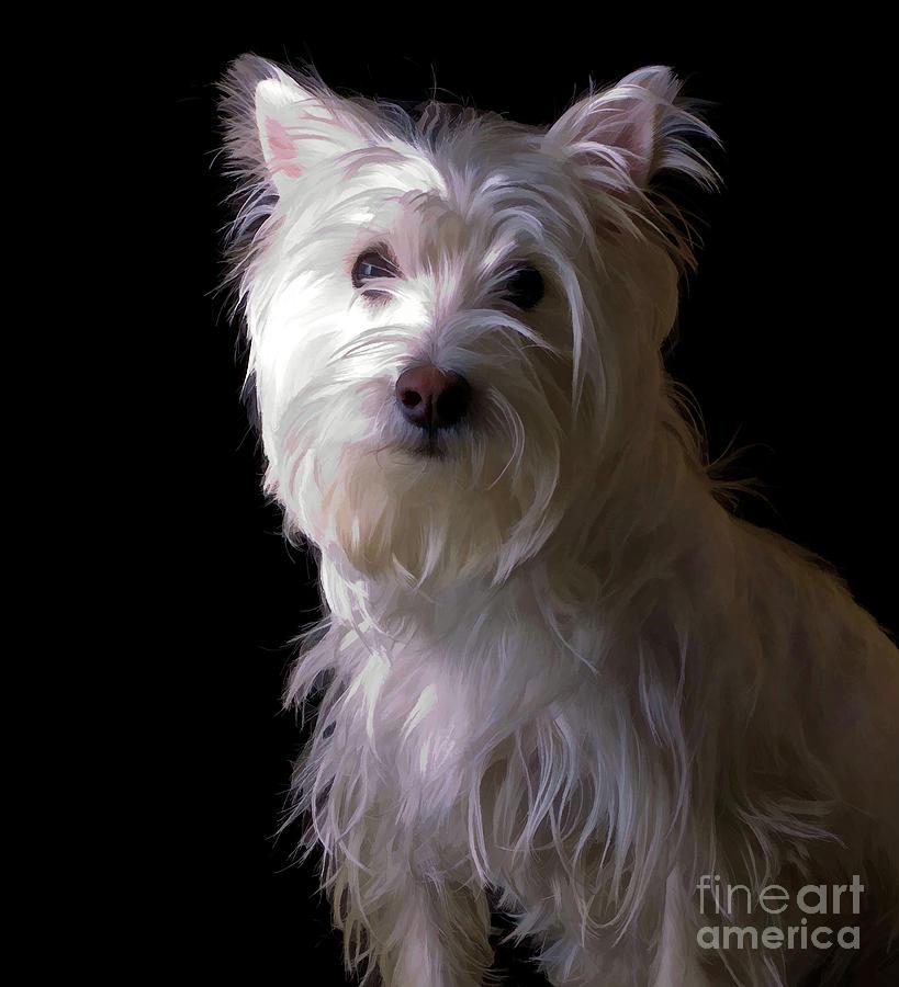 Pet Photograph - Westie Drama by Edward Fielding