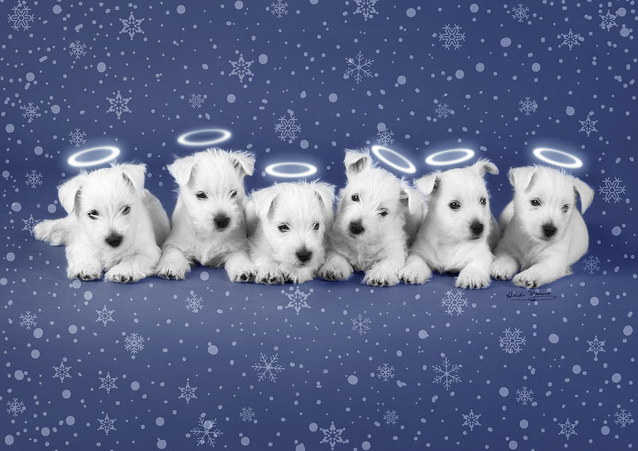 Westie Photograph - Westie Snow Angels by Heidi Marcinik