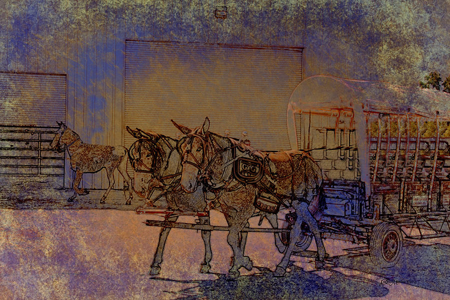 Mules Photograph - Westmoreland Mule Day by EricaMaxine  Price