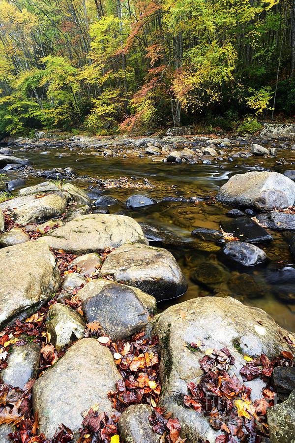 Autumn Photograph - Wet Autumn Day by Thomas R Fletcher