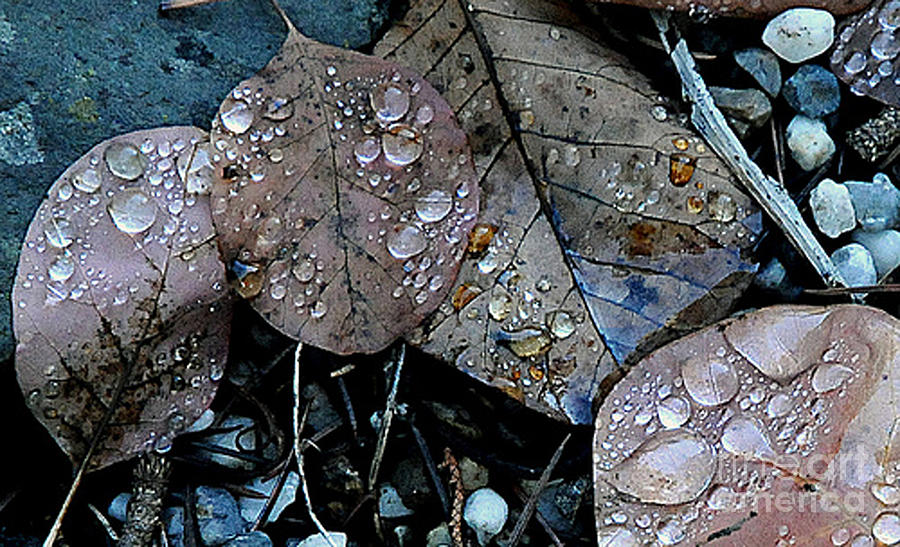 Forest Photograph - Wet Leaves by Artist and Photographer Laura Wrede