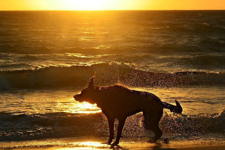 Wet Shaking Dog At Beach Photograph by Autumnn