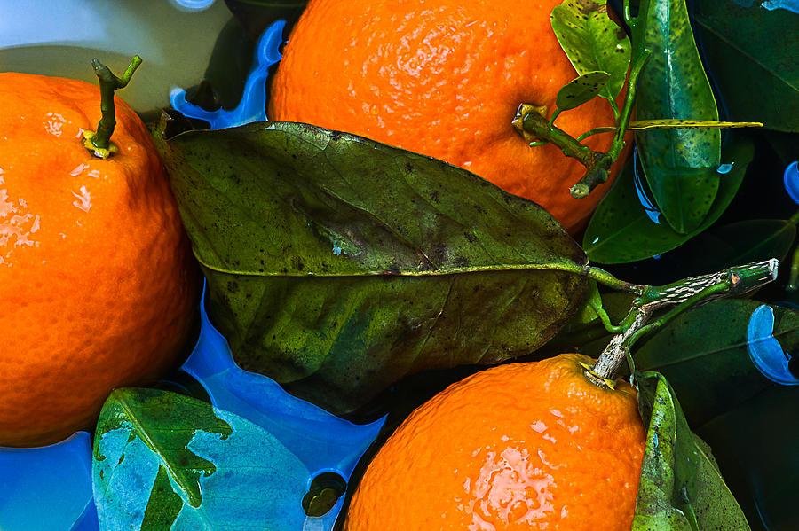 Mandarin Photograph - Wet Tangerines by Alexander Senin