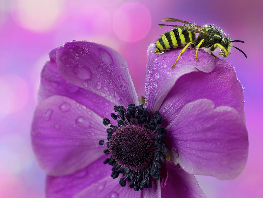 Wet Wasp Photograph by Mikroman6