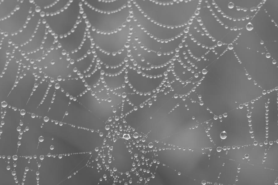 Spider Photograph - Wet Web by Kimberly Oegerle