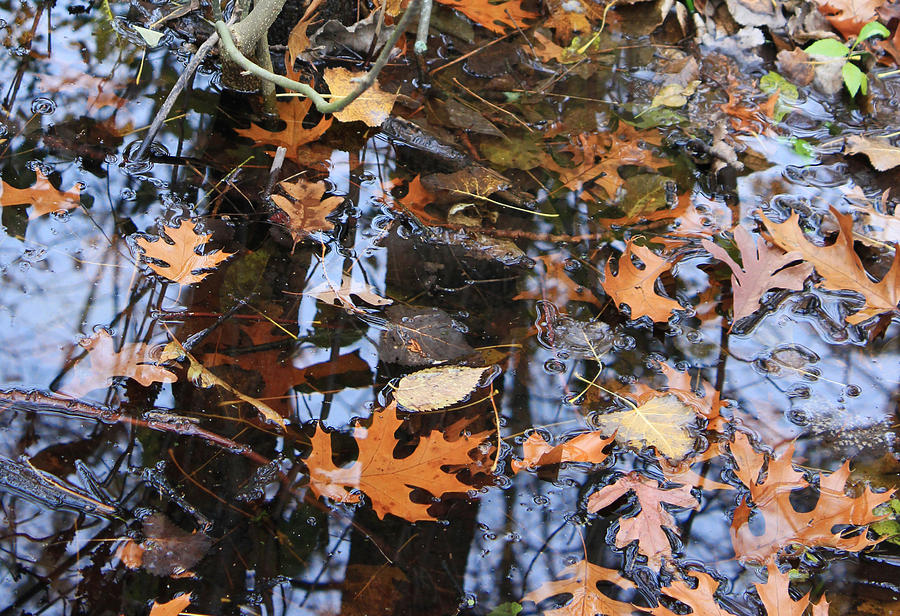 Wetland Photograph - Wetland Reflections 12 by Mary Bedy