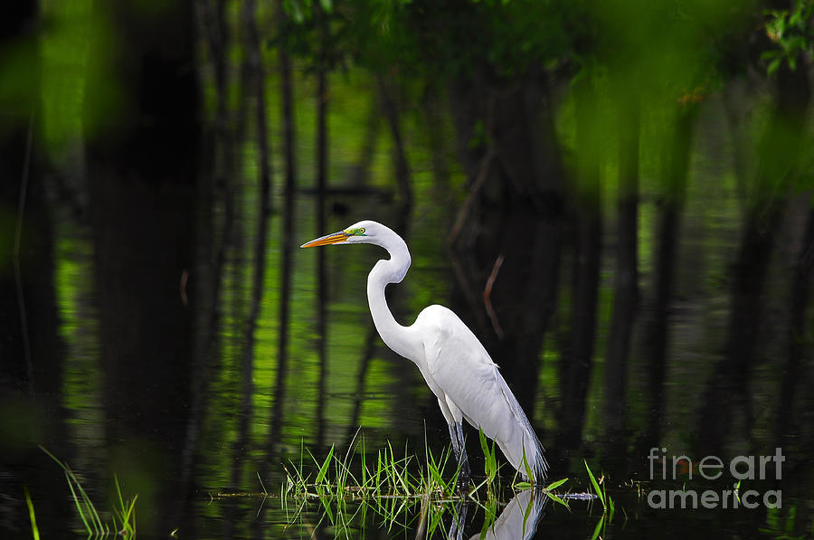 Wetland Wader by Al Powell Photography USA