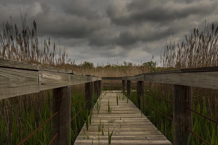 Wetlands Boardwalk Photograph
