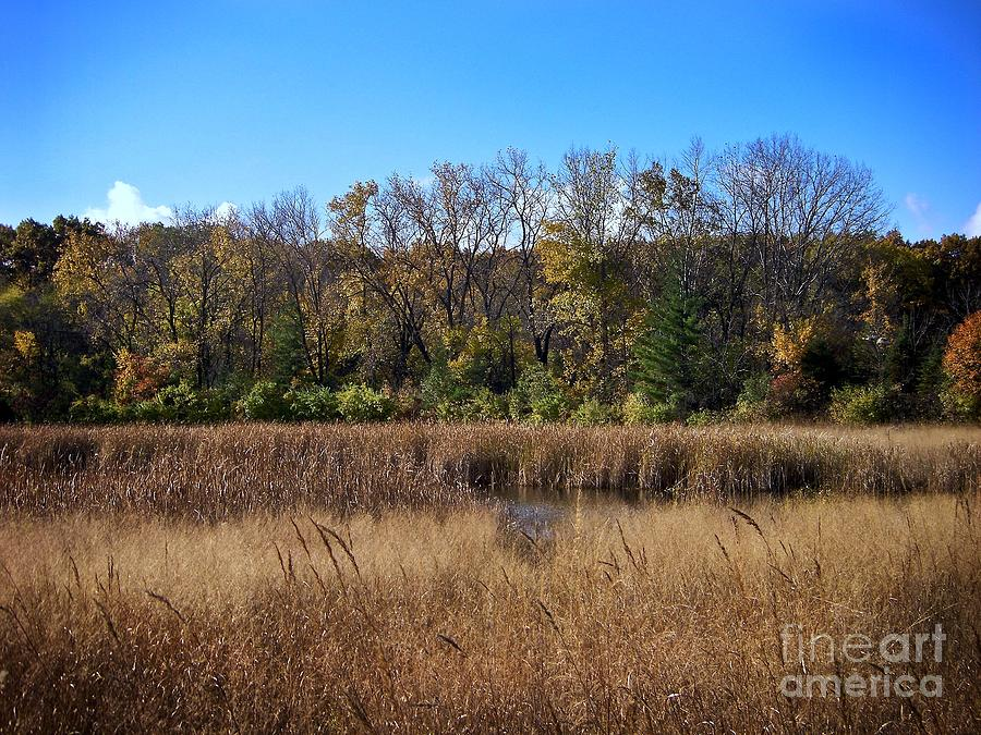 Wetlands In The Preserve - Autumn Photograph
