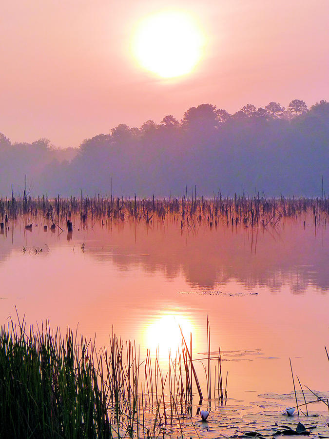 Alabama Photograph - Wetlands Sunrise by JC Findley
