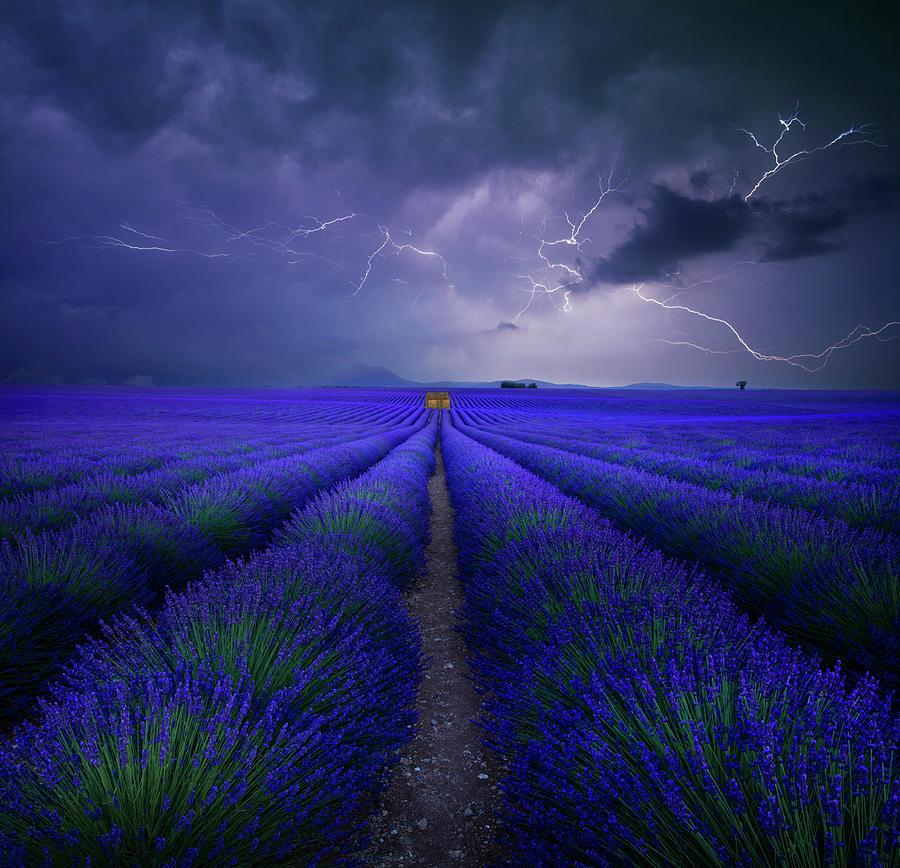 Lavendel Photograph - Wetter Im Lavendelfeld by Franz Schumacher