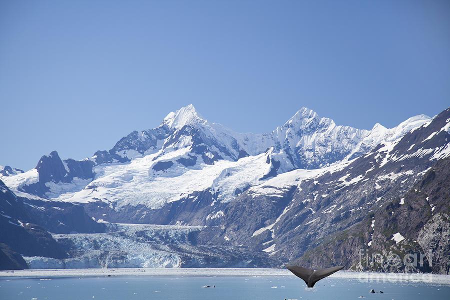 Alaska Photograph - whale in Glacier Bay Park Alaska by Nick Jene