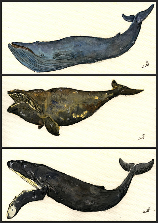 Blue Painting - Whales Compilation 1 by Juan  Bosco
