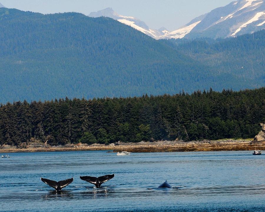 Whales in Alaska by Ken Arcia
