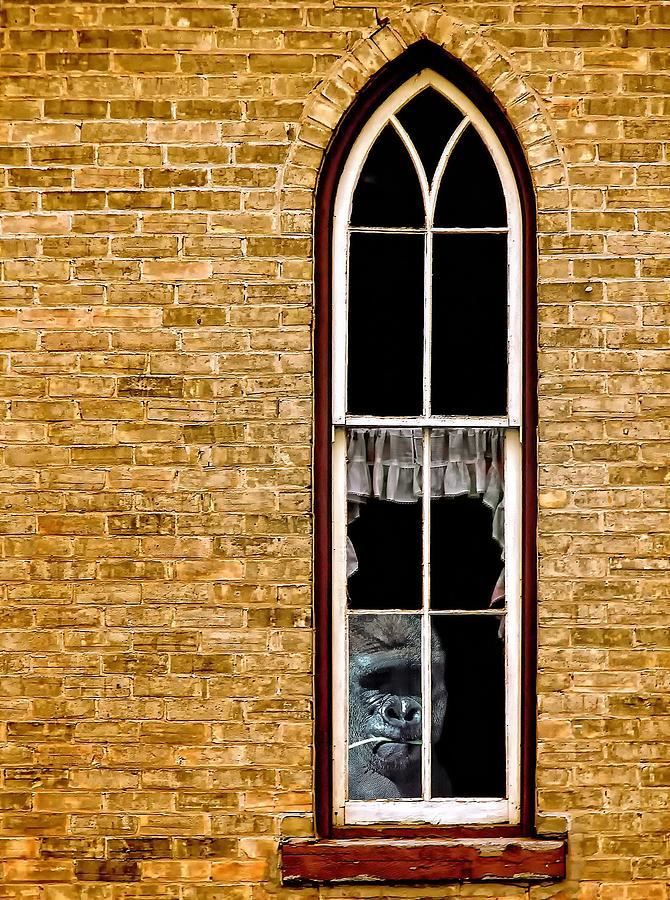 Church Photograph - What 800 Lbs Gorilla by Steve Harrington