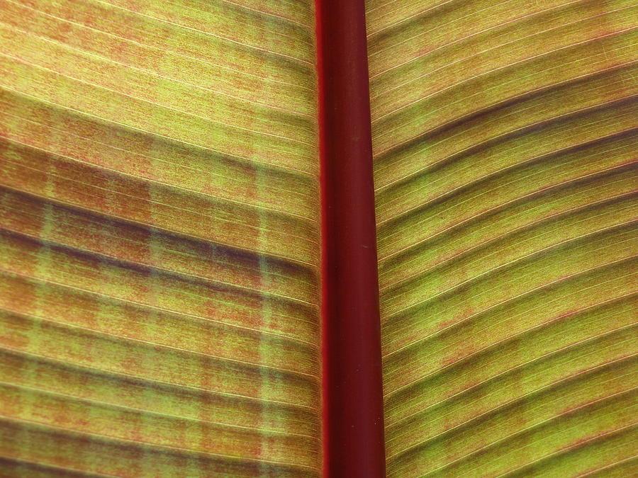 Plant Photograph - What Am I ? by Jonathan Kratz