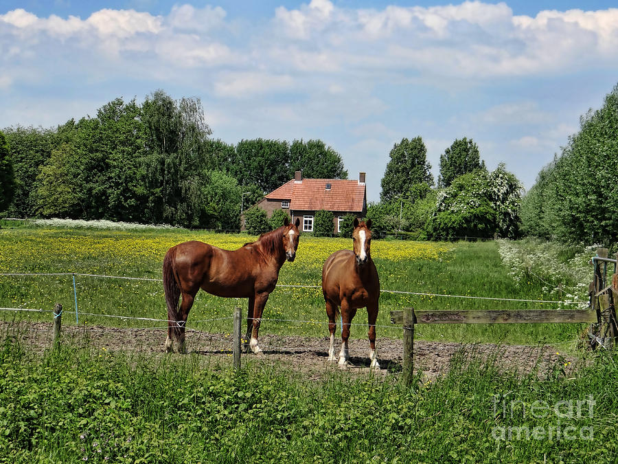 Farm Photograph - What Are You Staring At? by Bedros Awak