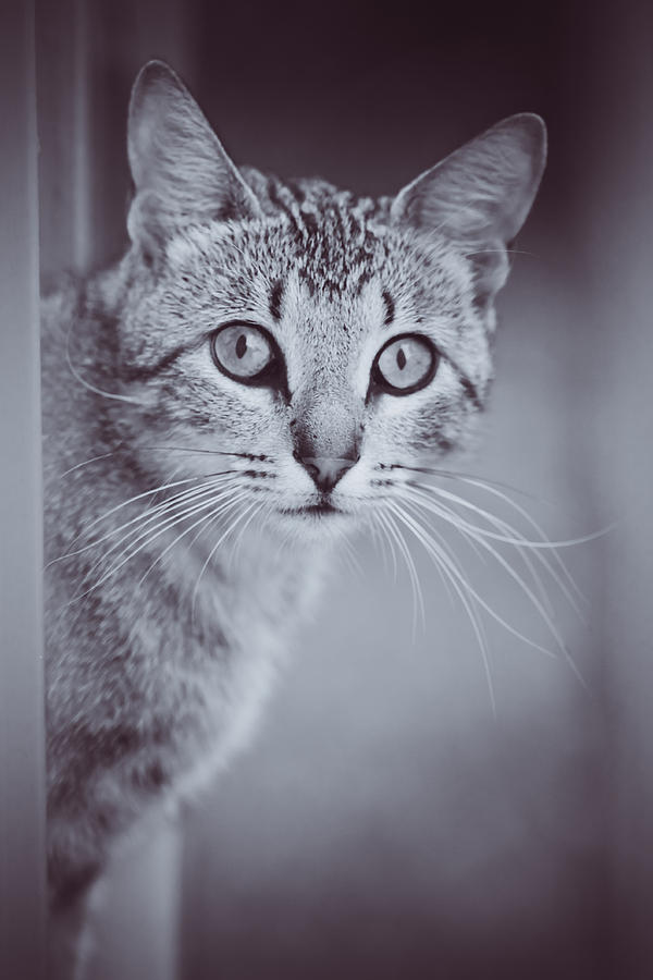 Kitty Photograph - What Eyes You Have by Kim Henderson