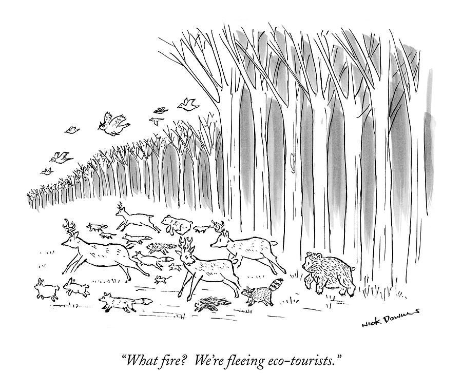 What Fire?  Were Fleeing Eco-tourists Drawing by Nick Downes