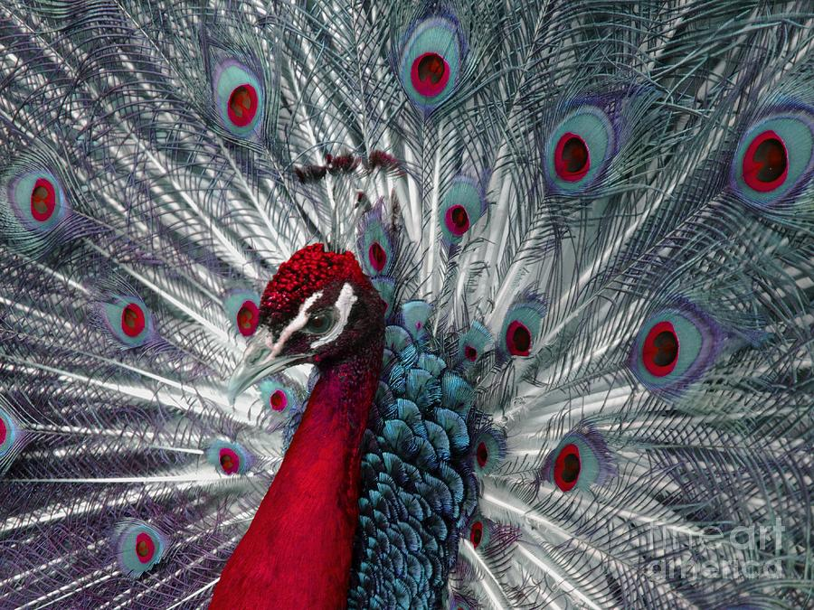 Peacock Photograph - What If - A Fanciful Peacock by Ann Horn