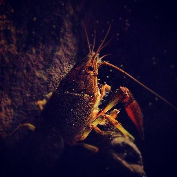 Crayfish Photograph - What Lies Beneath by Christy Beckwith