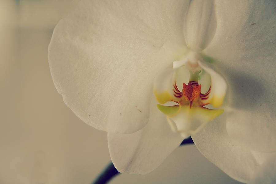 Orchids Photograph - What Love Felt Like by Laurie Search