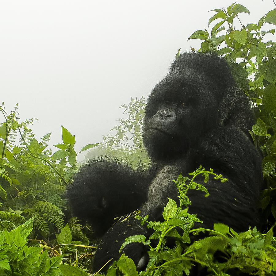 Rwanda Photograph - What You Looking At by Paul Weaver