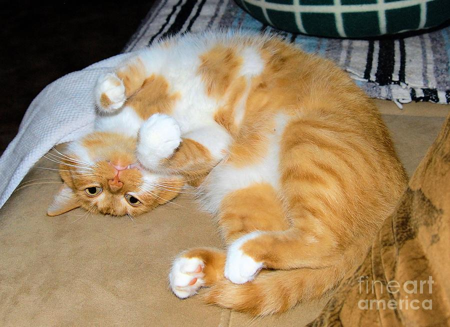 Cat Photograph - Whats Up? by Cheryl Poland