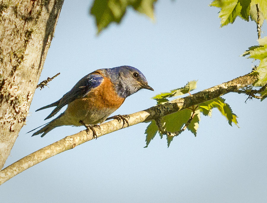 Birds Photograph - Whats Up by Jean Noren