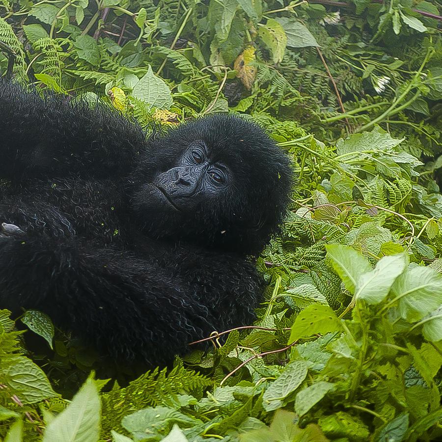 Rwanda Photograph - Whats Up by Paul Weaver