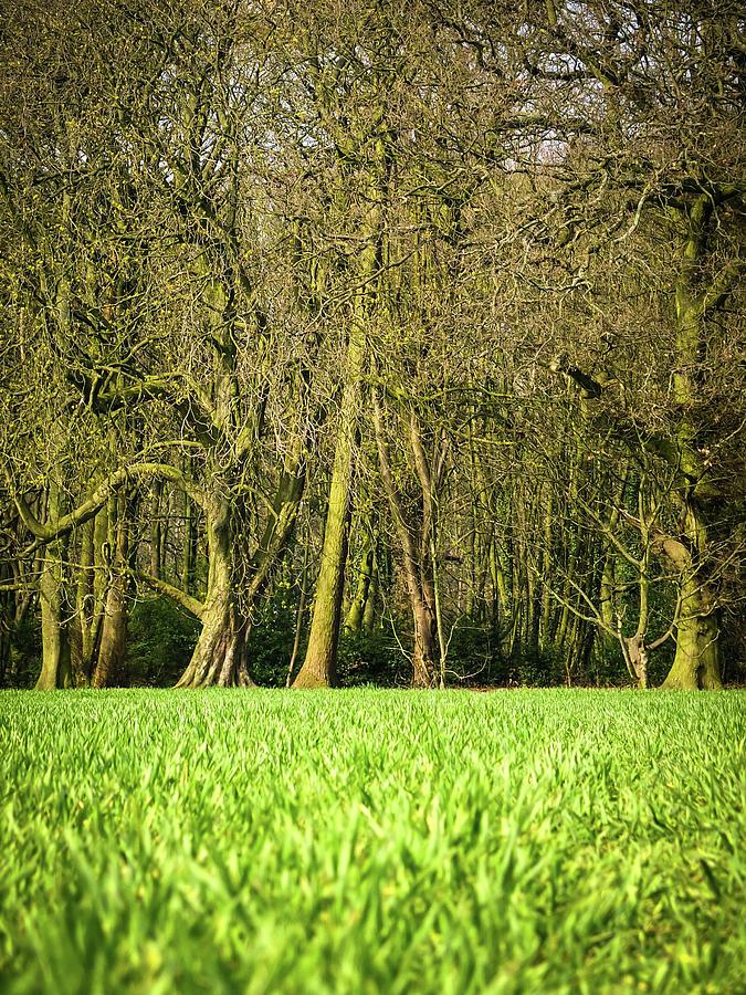 Wheat Field Photograph by Nuzulu