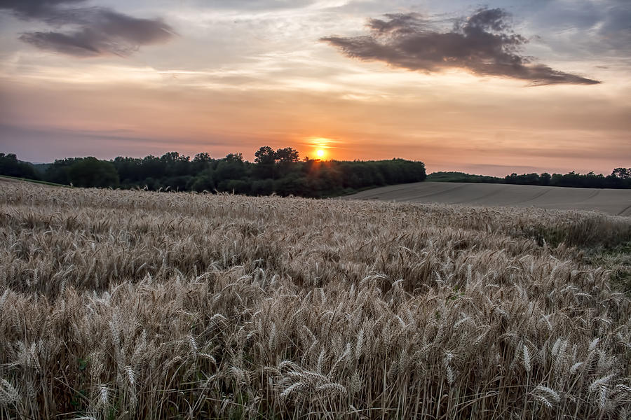 Wheat Field Photograph - Wheat Field Sunset in France by Georgia Fowler