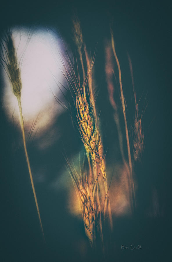 Abstract Photograph - Wheat Of The Evening by Bob Orsillo