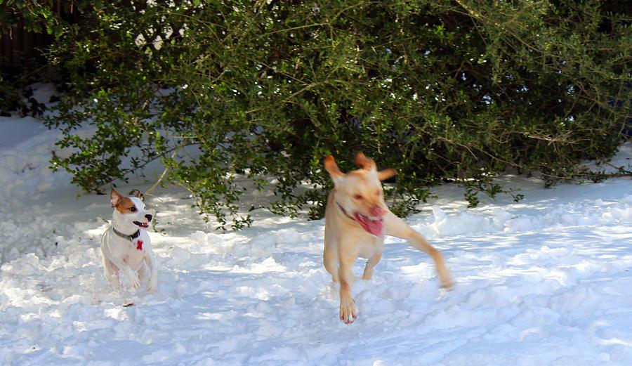 Dogs Photograph - Wheeee by Carolyn Ricks