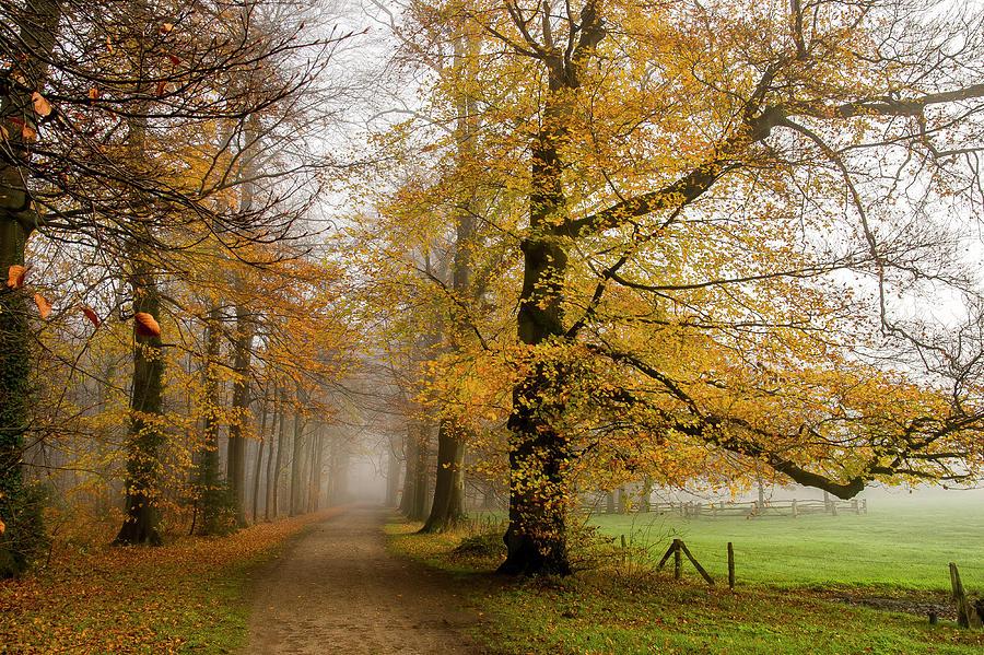 When Fall Leaves Photograph by Bob Van Den Berg Photography