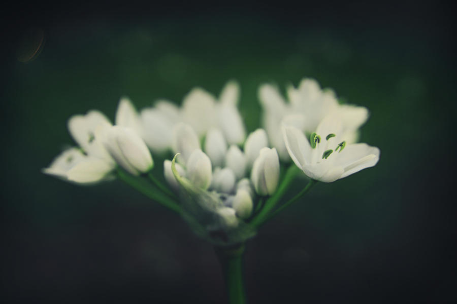 Flowers Photograph - When Love Was Young And New by Laurie Search