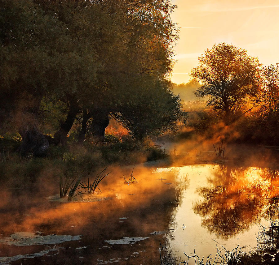 Mist Photograph - When Nature Paints With Light by Jimbi