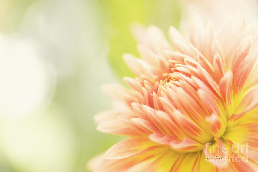 Dahlia Photograph - When Summer Dreams by Beve Brown-Clark Photography