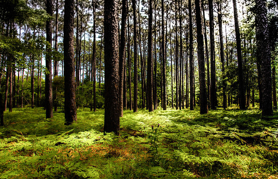 Forest Landscapes Photograph - When The Forest Beckons by Karen Wiles