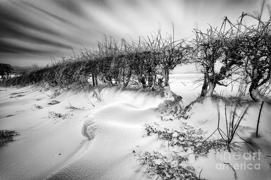Mono Landscape Photograph - When The Wind Blows by John Farnan