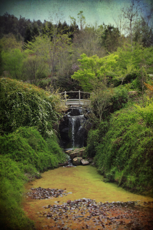 Quarryhill Botanical Garden Photograph - When Too Many Tears Have Fallen by Laurie Search
