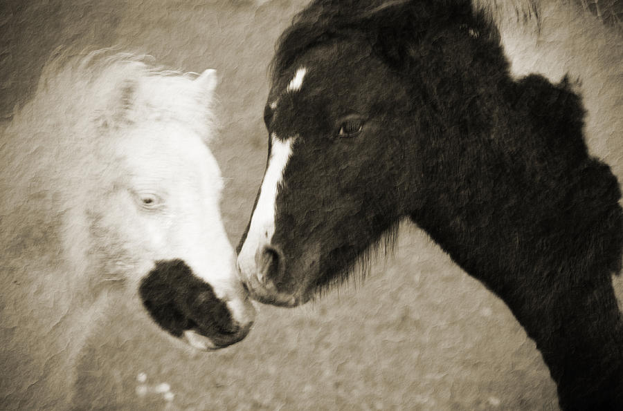 Horses Photograph - When We Touch by Karol Livote