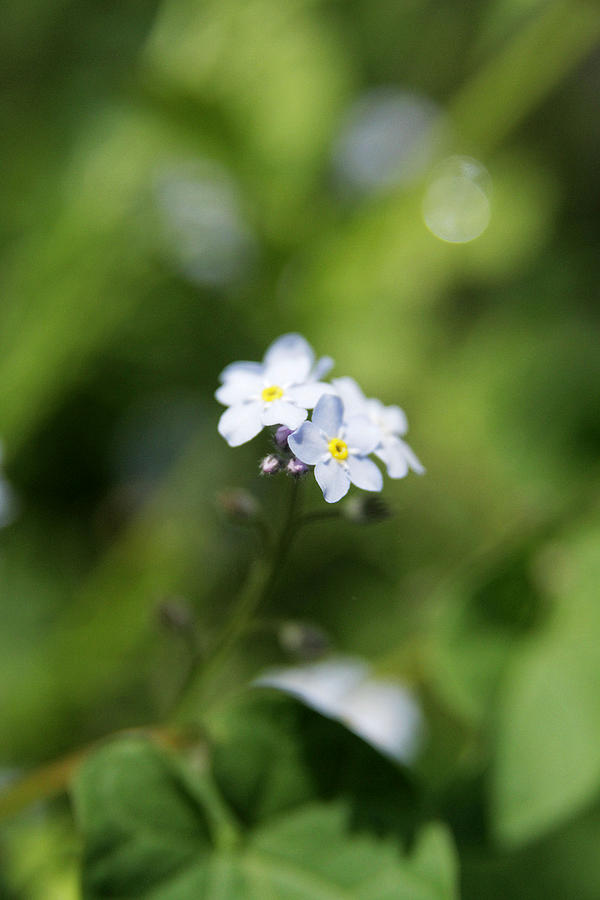 Flower Photograph - When You Look Close by Kim Lagerhem