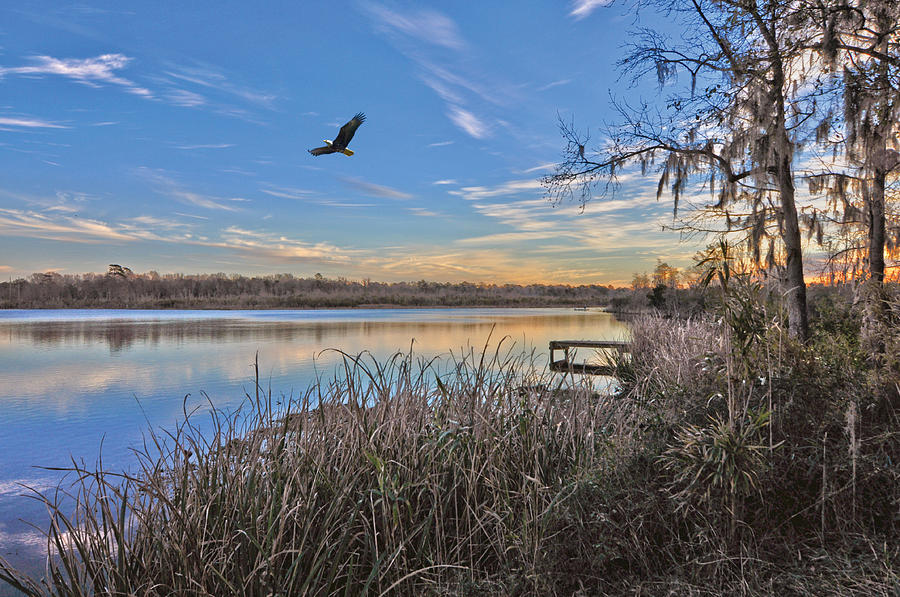 Eagles Photograph - Where Eagles Fly by Donnie Smith