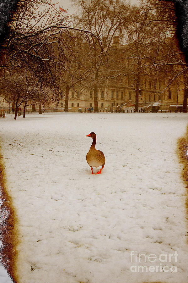 Goose Photograph - Where Is Everyone by Jasna Buncic